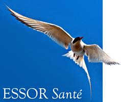 logo_essor-sante.png