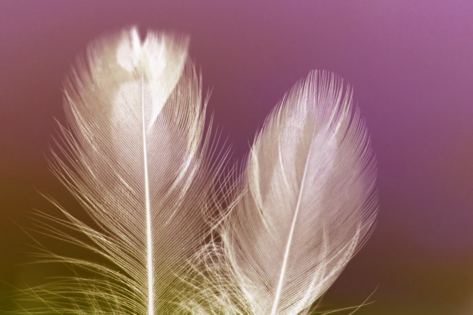 plumes3
